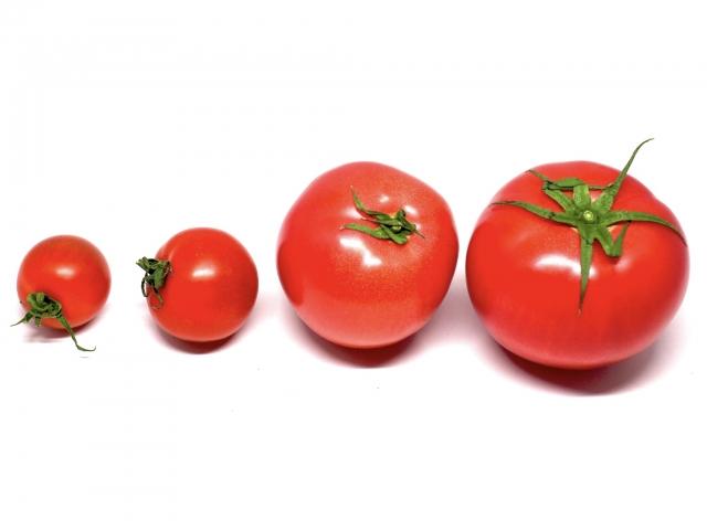 トマト|赤い色素「リコピン」には強い抗酸化作用がある