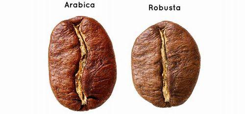 アラビカ種とロブスタ種~コーヒー豆の2大品種について~
