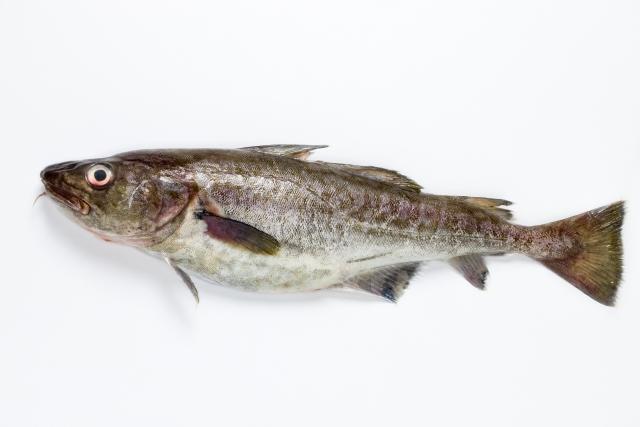 タラ【鱈】|脂質が少なく、低コレステロールでダイエットに最適