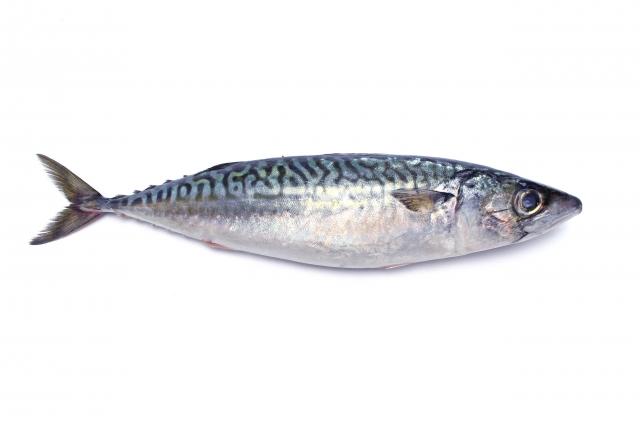 サバ【鯖】|豊富なDHAは脳の栄養素。海馬が活性し記憶も明晰に