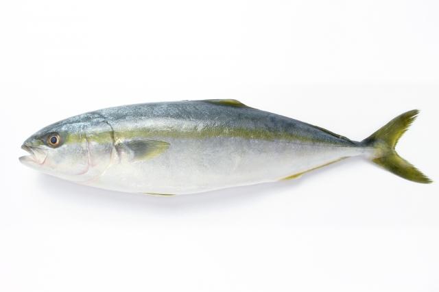 ブリ【鰤】|脂質やタンパク質に富む魚。過食は結構な高カロリーに