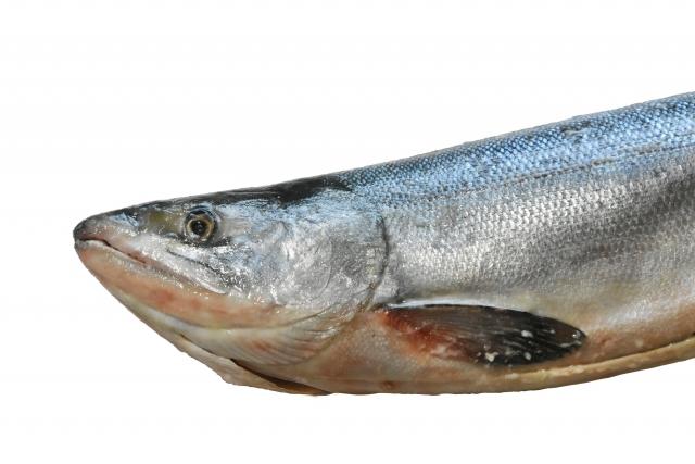 サケ【鮭】|サケは温性の白身魚。胃腸を温め、冷えや貧血の改善に