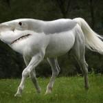 海底を歩くサメ!エポウレットシャークの新種をインドネシアで発見!~世界ふしぎ発見にも登場~写真や動画もあり