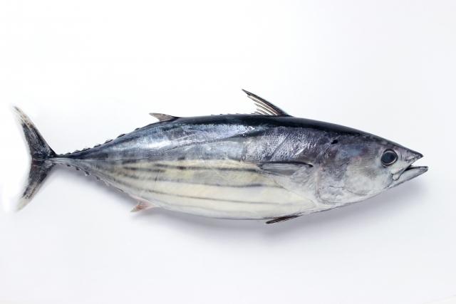 カツオ【鰹】|血合肉は鉄分豊富!貧血改善や滋養強壮に効果あり