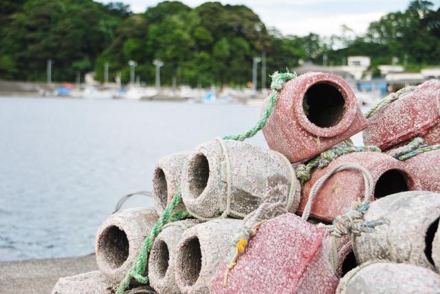 タコが危機!漁獲量の減少と健康食品としての効能と効果!タウリン、ビタミンB2などの栄養素!タウリン、ビタミンB2、ためしてガッテン