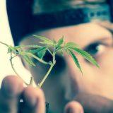 マリファナ豆知識~大麻は覚せい剤でも麻薬でもない~