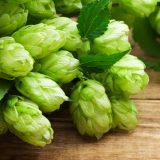 ビールは健康に良い!ウソを切り真実を知る ~動脈硬化、心筋梗塞、脳卒中、糖尿病、ダイエットに効果的なビールはラガーよりもエールのほうが効能が高い~